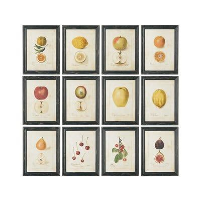 Set of 12 Anatomical Fruit Framed Prints - Black