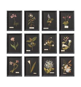 Set of 12 Framed Flower Botanical Prints - Multi