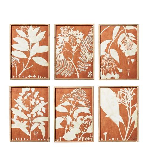 Set of 6 Flora Photogram Framed Prints - Orange