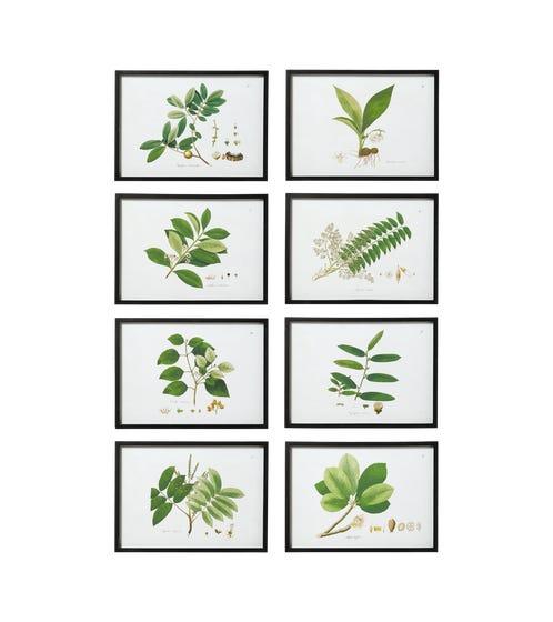 Set of 8 Framed Woodland Leaf Prints - Multi