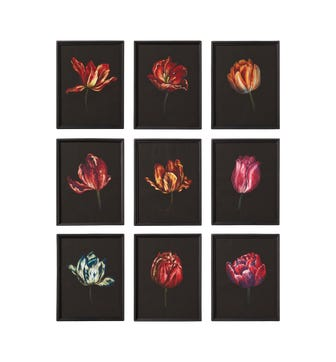Set of 9 Dutch Tulip Framed Prints - Multi