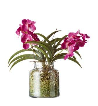 Cymbidium Orchids with Vase - Pink