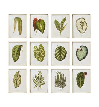 Exotic Leaf Prints Set of 12 - Green