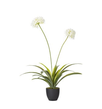 Faux Agapanthus Plant - White