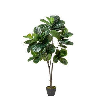 Faux Fiddle Plant Large - Green