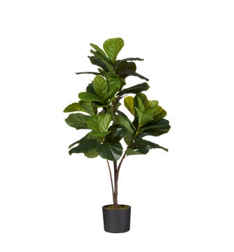 Faux Fiddle Plant Small - Green