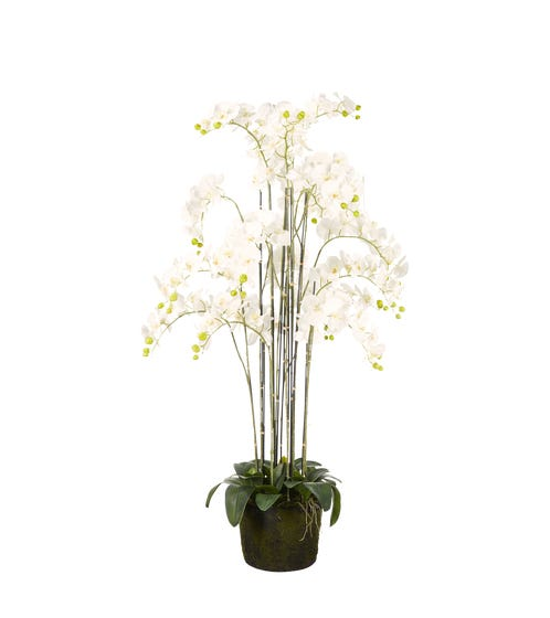 Faux Giant Phalaenopsis Orchid - White