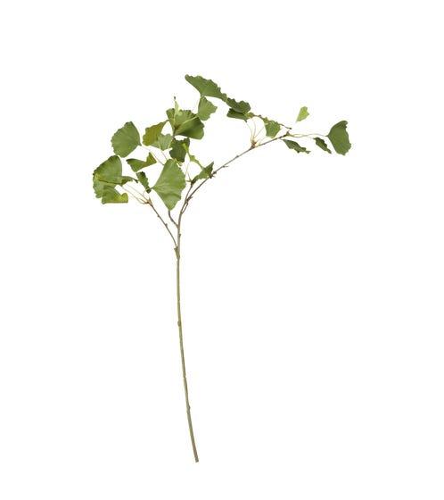Faux Ginkgo Leaf Stem - Green