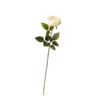 Faux Juno Old Fashioned Rose Stem - Cream