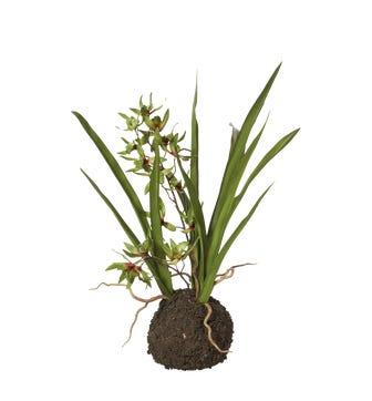 Faux Miniature Cymbidium Orchid - Green