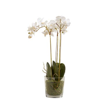 Faux Phalaenopsis Orchid With Glass Vase - White