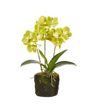 Faux Planted Mini Orchid - Green
