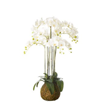 Faux Planted Phalaenopsis Orchid, Large - White