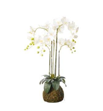 Faux Planted Phalaenopsis Orchid, Medium - White