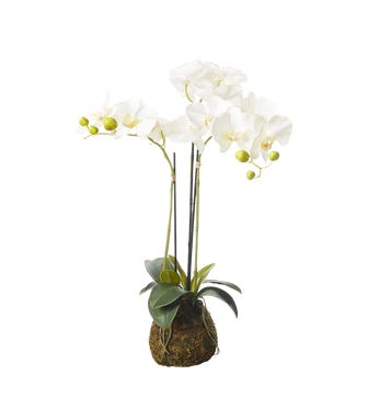 Faux Planted Phalaenopsis Orchid, Small - White