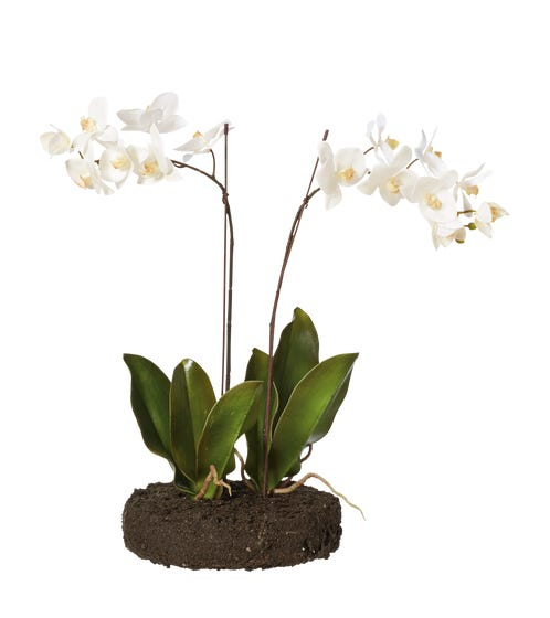 Faux Planted Phalaenopsis Orchid With Flat Bulb Base - White