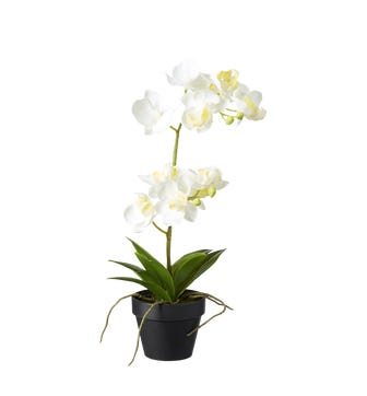 Faux Potted Mini Orchid - White