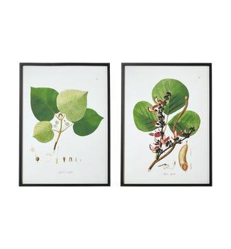 Framed Branch and Leaf Prints - Multi
