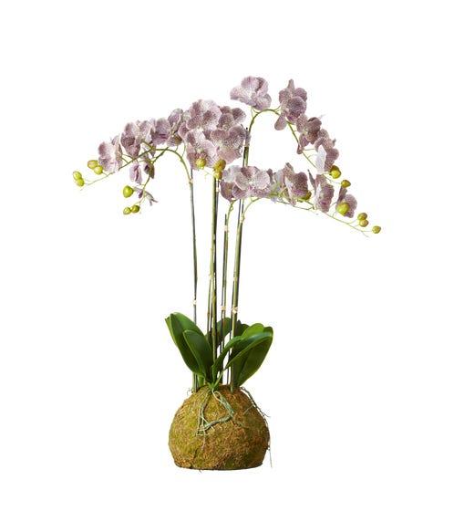 Large Faux Planted Phalaenopsis Gigantea Orchid - Purple