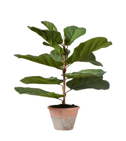Miniature Faux Fiddle Plant - Green