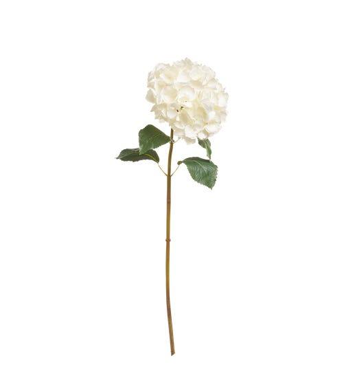 Mop Head Hydrangea Stem - White