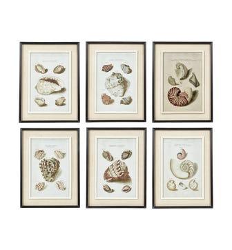 Seashell Framed Prints, Set of 6 - Multi