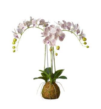 Small Faux Planted Phalaenopsis Gigantea Orchid - Purple