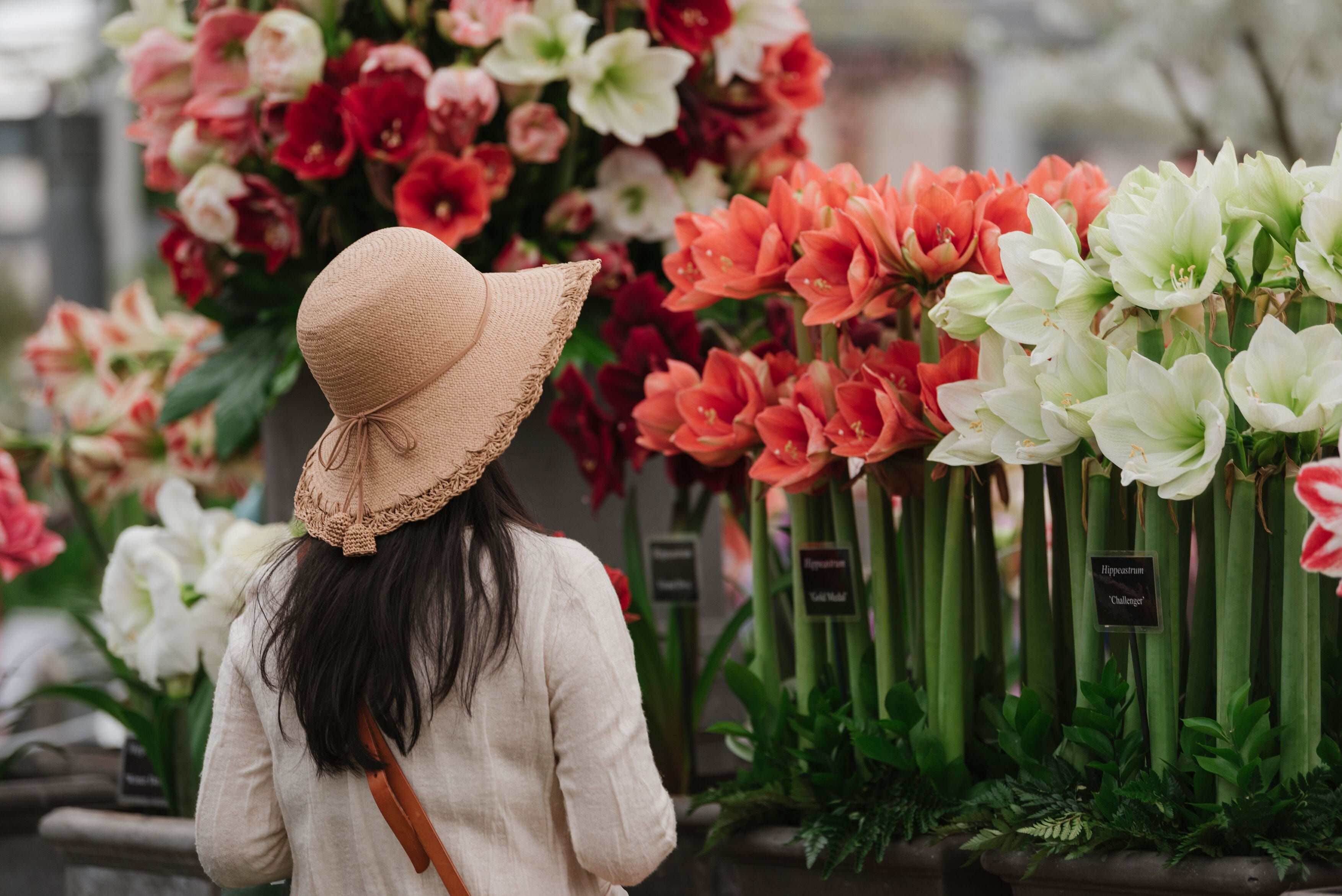 Woman wearing a straw hat, admiring flowers at the Chelsea Flower Show