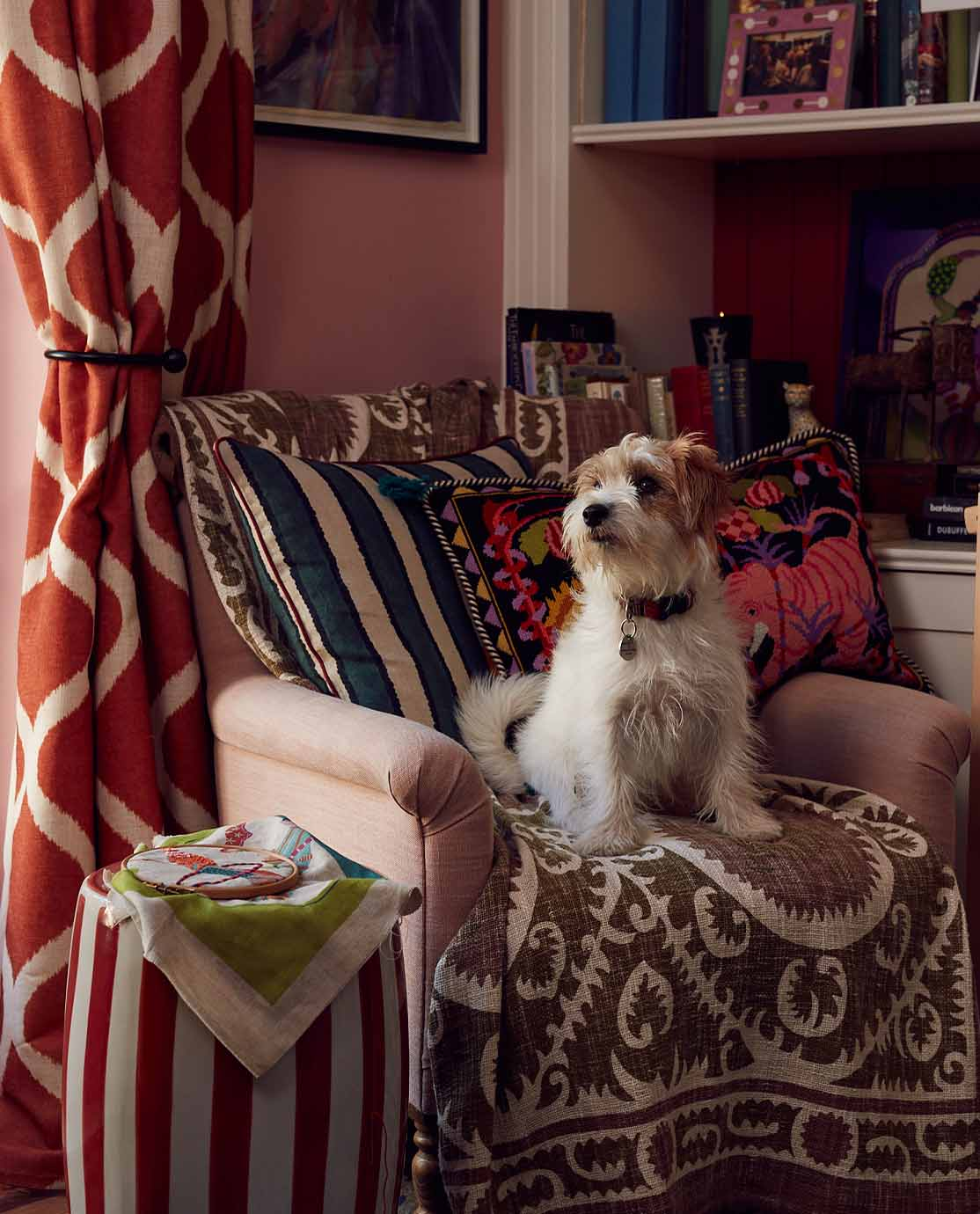 Eppie Thompson's dog sat on a armchair covered in printed blankets and cushions